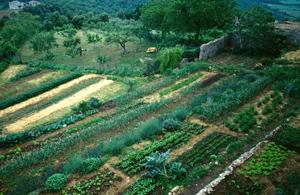 Spannoccia garden